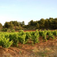 terroir  collines argileuses